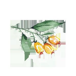 watercolor-flower-1